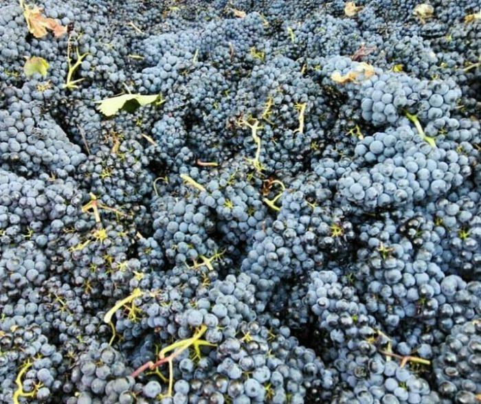 Vinos Sonia Cortes GourMed Tempranillo La Rioja